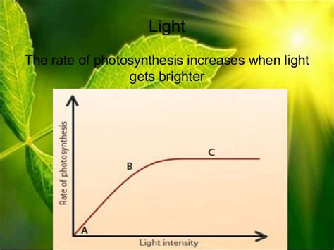 design experiment photosynthesis three essays on the economics of information technology