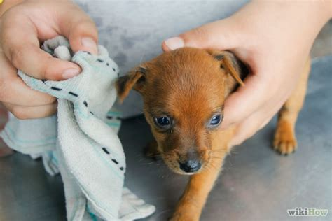 when to give puppy bath how to give a newborn puppy a bath 6 steps with pictures