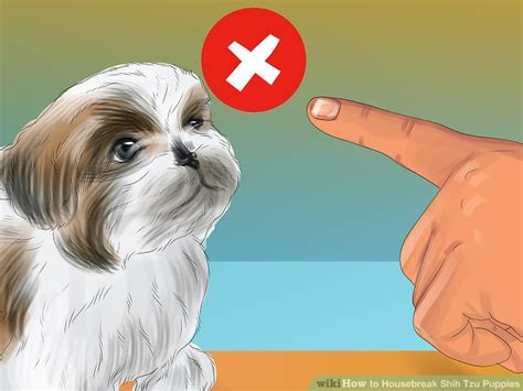 housebreaking a shih tzu 3 ways to housebreak shih tzu puppies wikihow