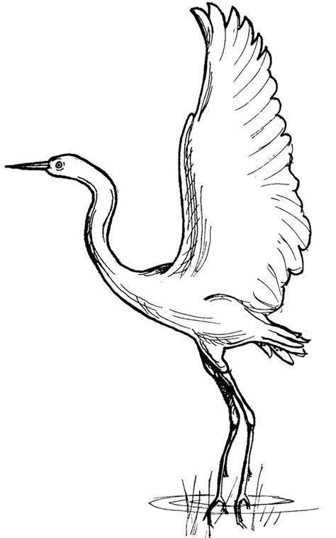 coloring pages of sw animals south african blue crane colouring pages desenhos para