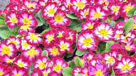 fiori da piantare a marzo quali fiori piantare nel mese di ottobre