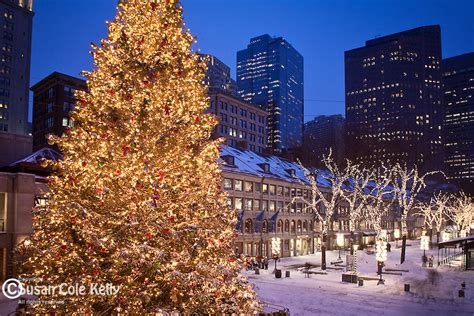 boston mass xmas tree lightging quincy market tree susan cole photography