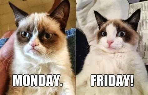 Friday Monday Meme - monday friday grumpy cat funny cat meme pinterest