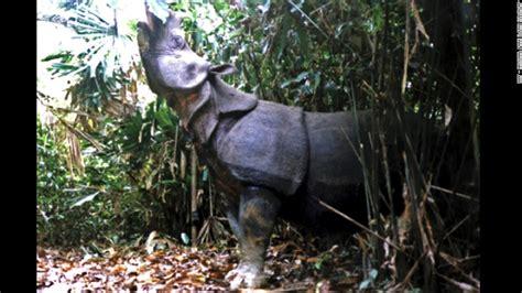 imagenes unicornio asiatico fotograf 237 an a un unicornio asi 225 tico uno de los animales