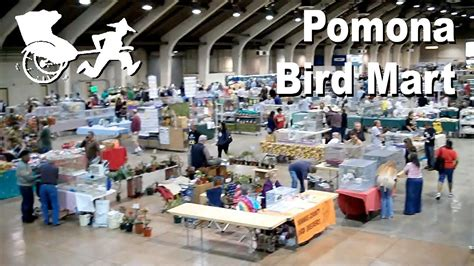 pomona bird mart 3 6 2011 youtube