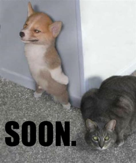 Soon Memes - image 141194 soon know your meme