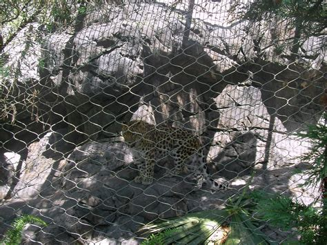 Central Florida Zoo And Botanical Gardens Home Mansion Central Florida Zoo And Botanical Garden