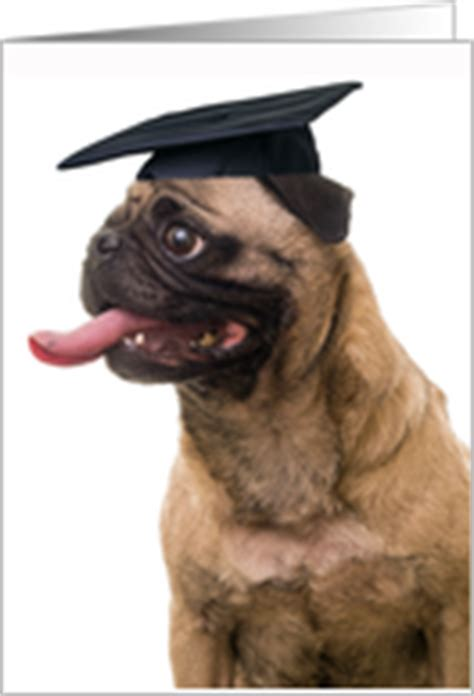 pug congratulations animal and pet graduation congratulation cards