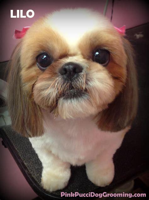 best shoo for shih tzu dogs shih tzu grooming exles torrance grooming pet spa pink pucci groomer