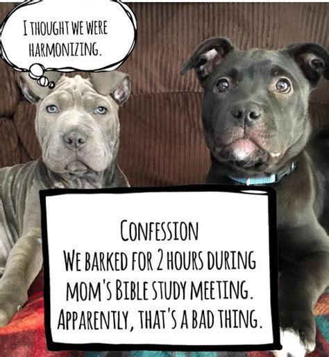 Dog Mom Meme - randomocity puppy tales dog mama memes