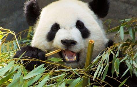 imagenes otoñales con animales c 243 mo podemos ayudar a los animales en peligro de extinci 243 n