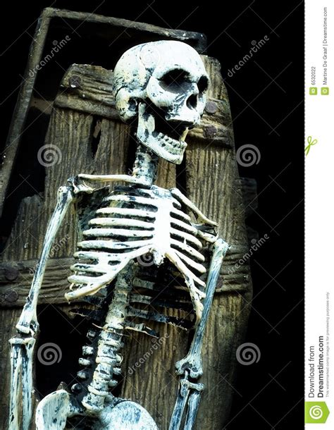 screaming skeleton in coffin stock photo image of bones