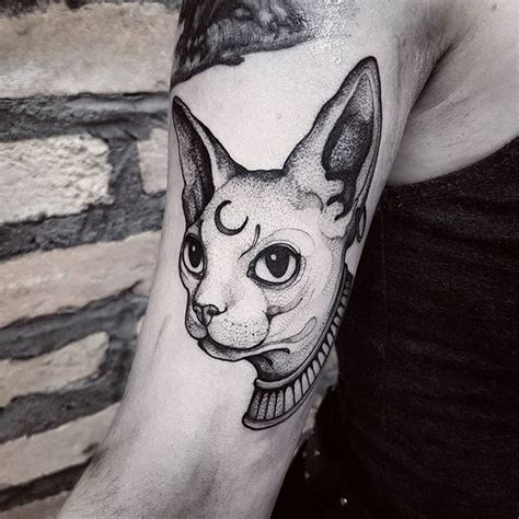 tattooed sphynx cat 25 best ideas about sphynx cat on