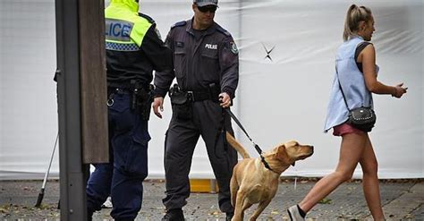 sniffer dogs do sniffer dogs actually work pilerats