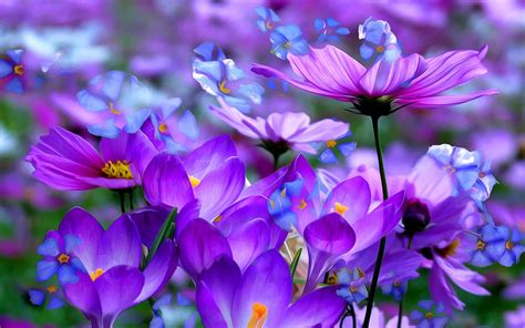 flower pic crocus purple flowers pic ololoshenka pinterest