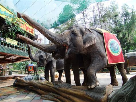 wisata taman safari bogor puncak  wajib dikunjungi