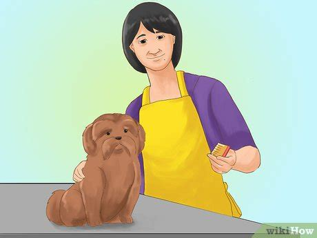 taking care of shih tzu 3 formas de cuidar un shih tzu wikihow
