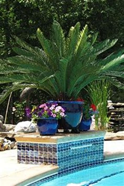 1000 images about potted plants for pool area on