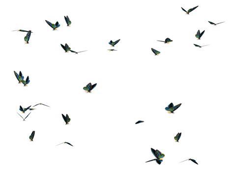 Bibit Pohon Indigofera rumput odot cv bintang tani