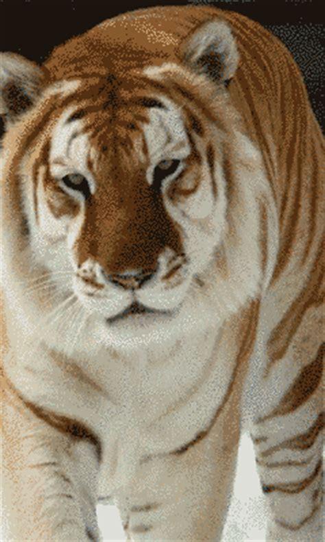imagenes leones blancos movimiento zoom dise 209 o y fotografia animales gif con movimiento