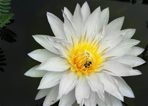 new year white flower white water sharpened senses acuity of vision