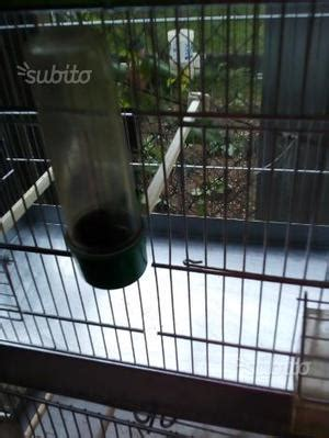 gabbie per canarini usate per allevamento gabbie usate per sala parto scrofe posot class