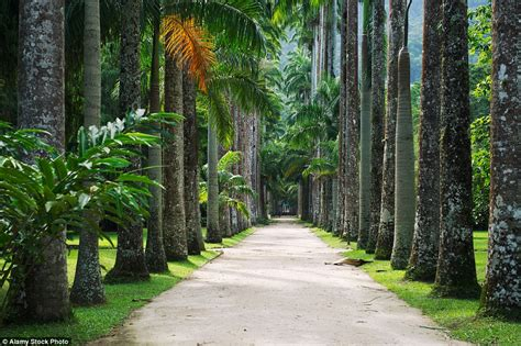 De Brazil Palm Gardens by From Cacti In The American Desert To Moss In A Japanese