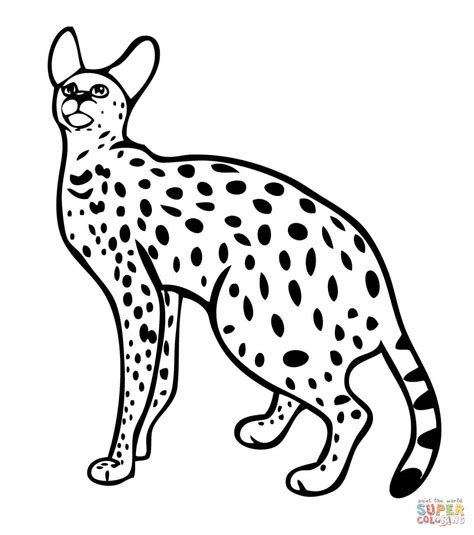 serval wild cat coloring page free printable coloring pages