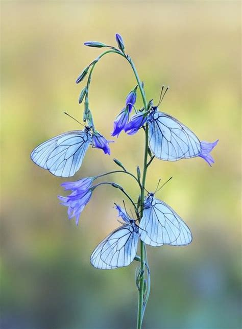 beautiful pictures  flowers  butterflies