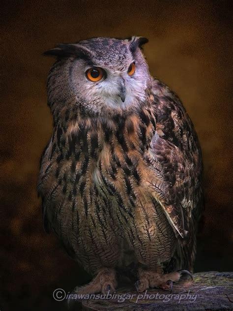 tattoo eagle owl eurasian eagle owl pictures to pin on pinterest tattooskid