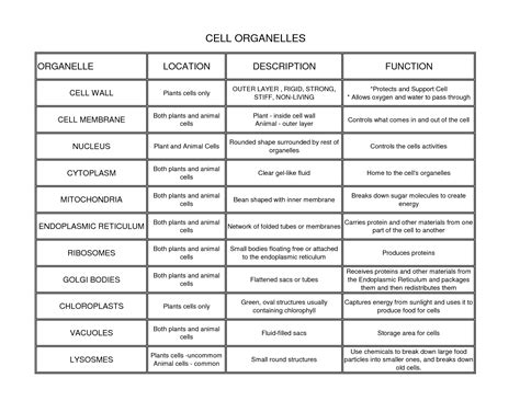 cell diagrams and organelle chart answers organelle with its function images biology