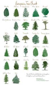 25 best ideas about evergreen trees landscaping on