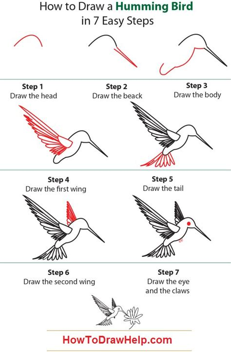 how to draw a hummingbird how to draw a humming bird