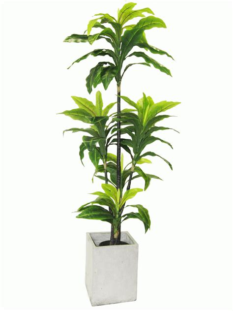 cool indoor plants that don t need sunlight