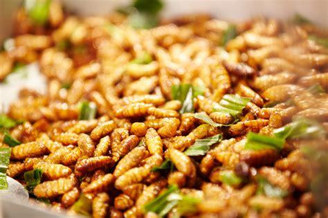 cuisine insectes comestibles listes de insectes comestibles insectes comestibles