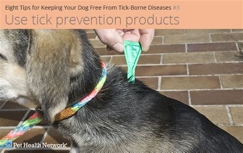 tick prevention products eight tips for keeping your free from tick borne diseases