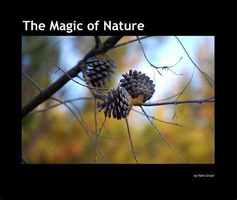 ordinary magic vignettes from the big apple books the magic of nature by fabio grassi arts photography