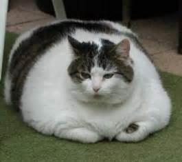 191 qu 233 puede hacer si su gato tiene gases malolientes