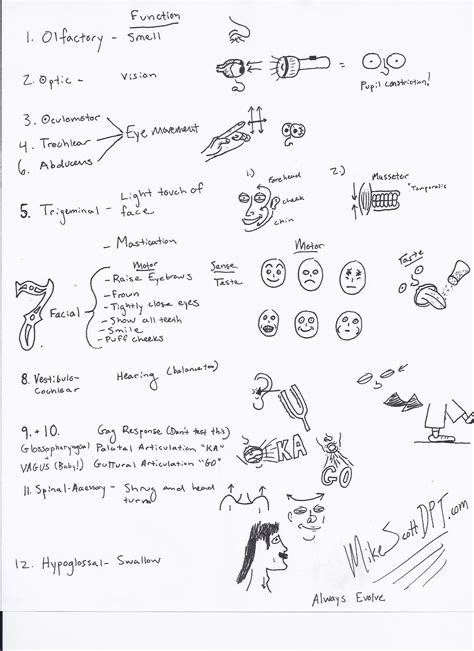 cranial nerve exam cheat sheet mike scott dpt