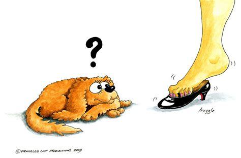 syringomyelia in dogs syringomyelia simplifed cavalier matters