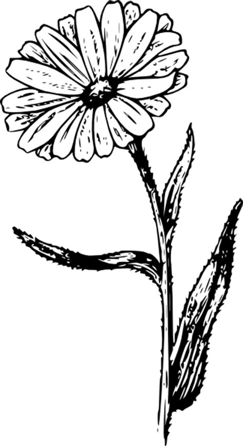 calendula flower tattoo clipart best
