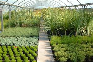plants trees and shrubs hollybush garden centre and