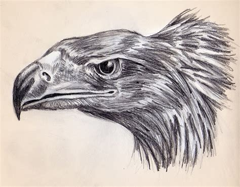 Drawings Of Animals by Animal Drawings On Behance