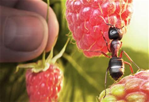 Mittel Gegen Ameisen Im Rasen 1032 by Ameisenbek 228 Mpfung In Haus Garten Und Rasen