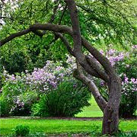 alberi da giardino con fiori piante da vaso per esterno piante da giardino piante