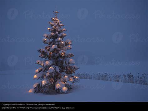 weihnachtsbaum im schnee ein lizenzfreies stock foto von