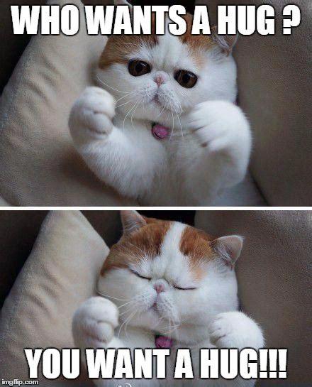 Hug Meme - cats need hug imgflip