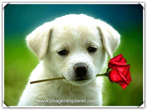 dibujo de cachorro con una flor en la boca para colorear imagenes tiernas gif animados de perro cachorro con una