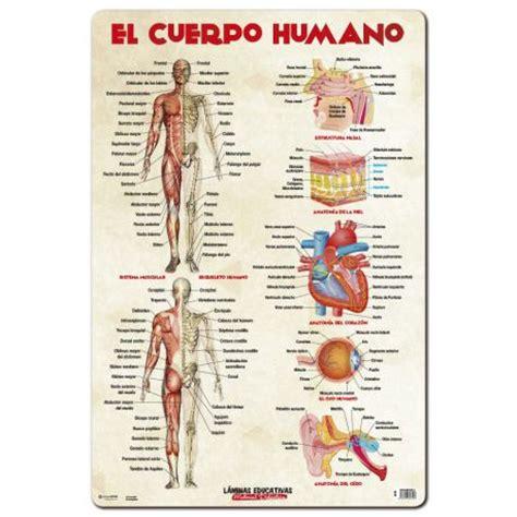el cuerpo educational poster el cuerpo humano grupo erik editores s l