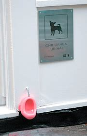 Chihuahua Urinals by Chihuahua Urinals Ohgizmo